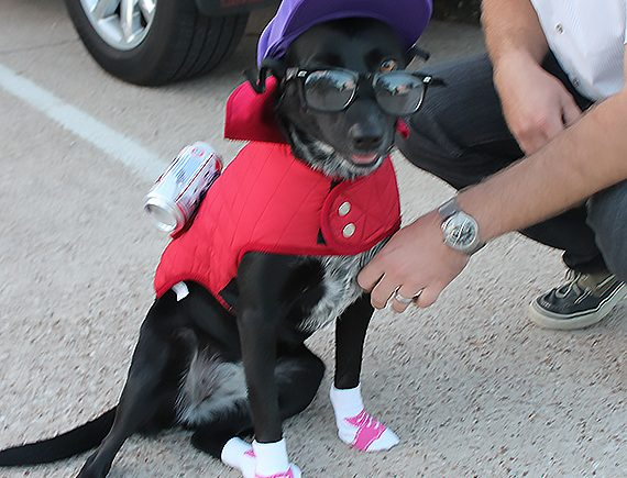Dog Halloween Costume DIY Hipster I Luna B @ Happy Chapter