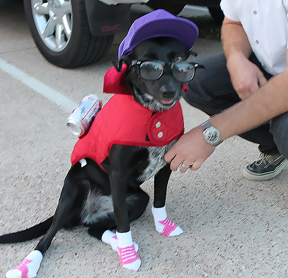 Hipster Halloween Dog Costume I Luna B @ Happy Chapter